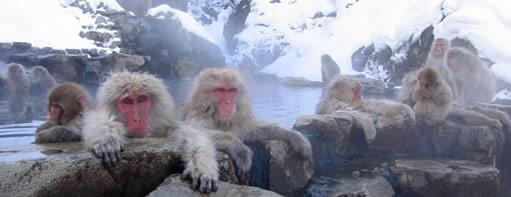 Jigokudani Monkey Park (地獄谷野猿公苑 Jigokudani Yaen Kōen) a.k.a. Snow Monkey Onsen in Yamanouchi, Nagano, Japan