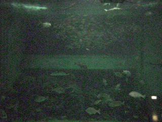 Joetsu City Aquarium in Niigata - Live Camera